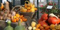 Free Pumkins And Squashes. Royalty Free Stock Photo - 28821405