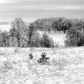 Free Frosty January Day. Royalty Free Stock Photo - 28821955