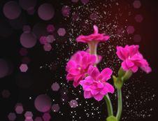 Free Kalanchoe Flower Stock Photos - 28822443