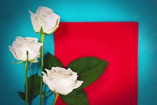 Free Three White Roses With Red Card Royalty Free Stock Images - 28824389