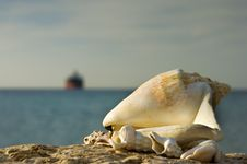 Free Shells Of The Red Sea, Eilat, Israel Stock Image - 28828501