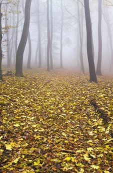 Free Autumn Forest Stock Photography - 28829862