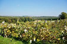 Free Vineyard Stock Images - 28832514
