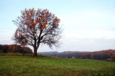 Free Tree In Autumn Stock Photography - 28833022