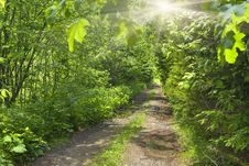 Free Road In Summer Forest Stock Photo - 28835290