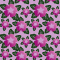 Free Floral Seamless Pattern With Violet Flowers. Stock Photos - 28842673