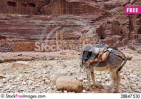 Free Donkey In Petra. Stock Photo - 28847530