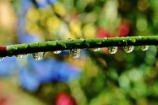 Free Raindrops On Bamboo Grass Stock Images - 28844784