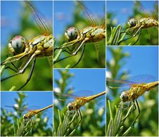 Free Dragonfly Royalty Free Stock Photography - 28845297