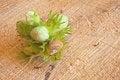 Free Fresh Green Hazelnut On  Brown Background Stock Image - 28850481