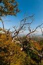 Free Dry Tree Royalty Free Stock Image - 28851536