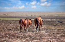 Horses On The Prairie Royalty Free Stock Photos