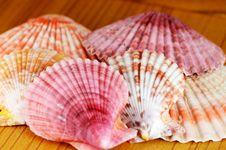 Free Sea Shell. Stock Photos - 28871083