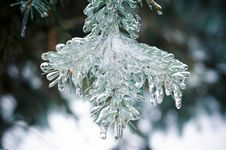 Free Icy Pine Stock Photography - 28873532