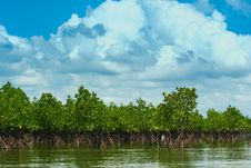Free Thailand Mangrove Forest Royalty Free Stock Image - 28875696