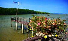 Free Thailand Mangrove Forest Stock Photo - 28875820