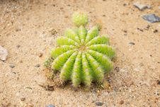 Free Cactus Stock Photography - 28878012