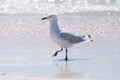 Free Seagull On Beach Stock Photo - 28886870