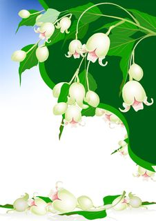 Free Beautiful Spring Bells Flowers On Elegant Background Stock Images - 28881374