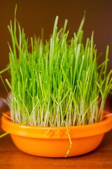 Free Cat Grass Stock Image - 28891741