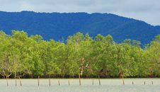 Free Mangrove Forest, Thailand Stock Image - 28899671
