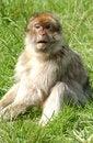 Free Monkey Stock Photos - 2894213
