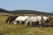 Free Horses Stock Photos - 2890383