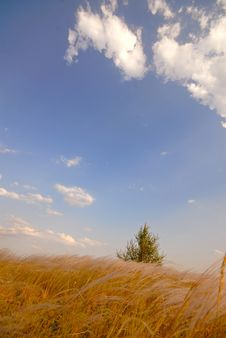 Free Lonely Tree And Steppe Royalty Free Stock Photos - 2890648