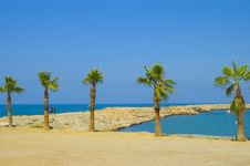 Free Palm Trees Beach Stock Image - 2891141