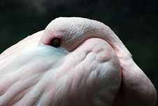 Free Flamingo Stock Image - 2897201