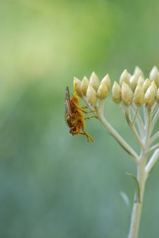 Free Bee On Flower Royalty Free Stock Image - 2899776