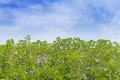 Free Trees And Sky Royalty Free Stock Photo - 28914695