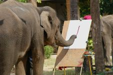 Free The Elephant Is Painting Show Royalty Free Stock Image - 28913886