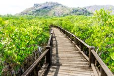 A Wooden Bridge On Mangrove Forest Royalty Free Stock Photos