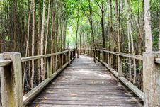 Free A Wooden Bridge On Mangrove Forest Royalty Free Stock Photography - 28914647