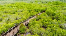Free A Wooden Bridge On Mangrove Forest Royalty Free Stock Image - 28914656