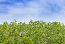 Free Trees And Sky Royalty Free Stock Photo - 28914695