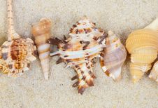 Free Sea Shells With Sand As Background Royalty Free Stock Images - 28918869