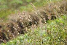 Wayside Grass Royalty Free Stock Photos