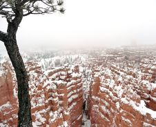 Free Bryce Canyon In Winter Royalty Free Stock Photography - 28921097