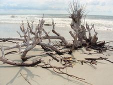 Free Dead Tree On A Beach Stock Photo - 28921730