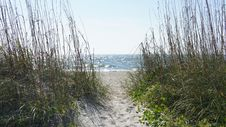 Free Sand Dunes And Sea Oats Royalty Free Stock Photos - 28921738