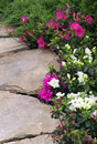 Free Garden Path With Rhododendron Royalty Free Stock Photos - 28933758