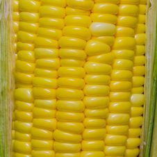 Free Corn Close Up Stock Photo - 28939120