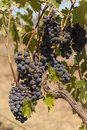 Free Winery Stock Images - 28940044