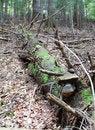 Free Dead Spruce Tree Trunk Stock Photos - 28942563
