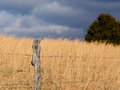 Free Sunlight And Dark Clouds On A Field Of Sage. Stock Images - 28945944