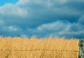 Free Sunlight And Dark Clouds On A Field Of Sage. Royalty Free Stock Image - 28945986
