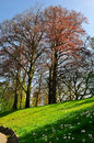 Free Spring Tree On Meadow Stock Photography - 28946752