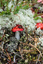 Free Red-speckled Mushroom Royalty Free Stock Images - 28948479